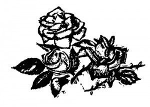 Rosa02